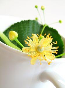 Fitoterapia, homeopatia e Alopatia: conheça cada uma