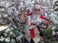 Festa da Florada da Cerejeira