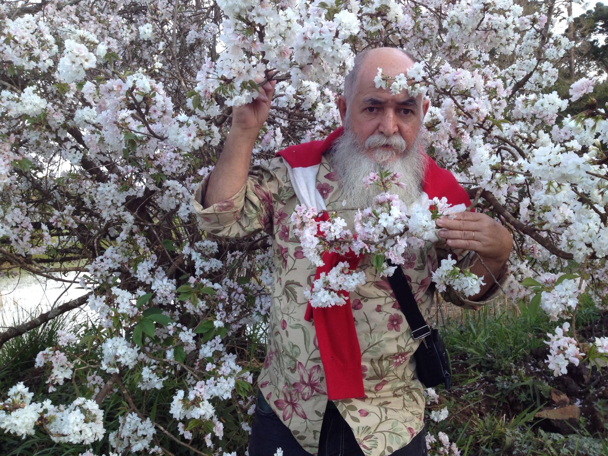You are currently viewing Festa da Florada da Cerejeira