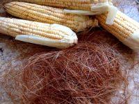Cabelo-de-milho ou Estigmas