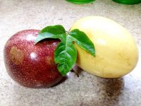 Maracujá-azedo, Maracujá-peroba ou Passiflora