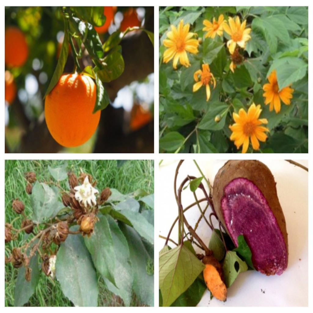 Plantas medicinais: conheça os benefícios de cura e como usar em casa