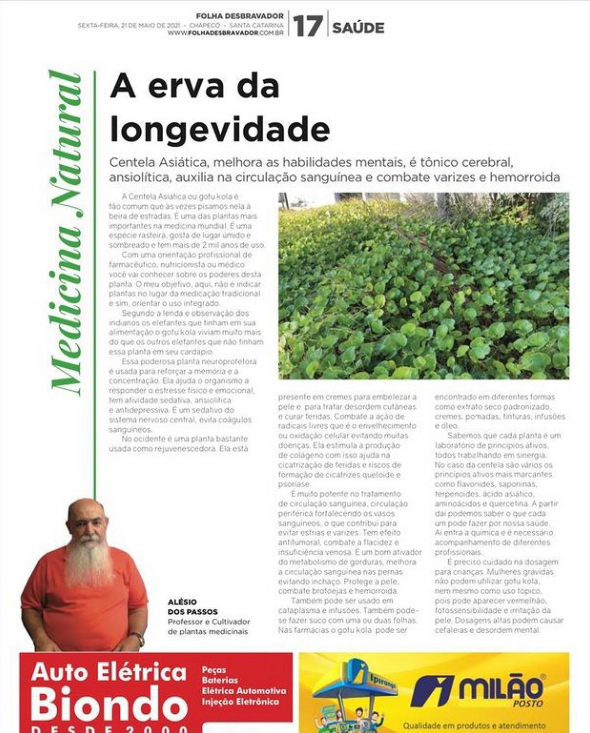 A erva da longevidade